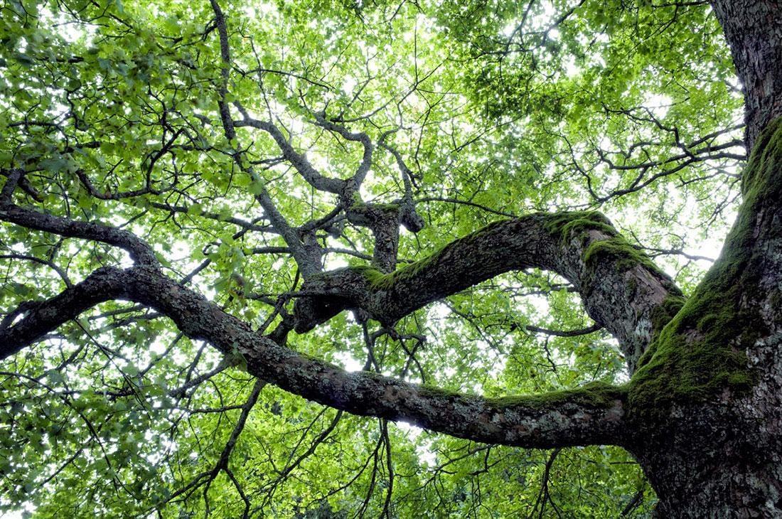 Šumava 1